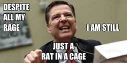 Despite All My Rage Just a Rat in a Cage Comey Weasel BANNER
