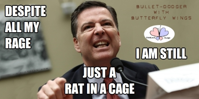 Despite All My Rage Rat in a Cage Comey BANNER Bullet-Dodger