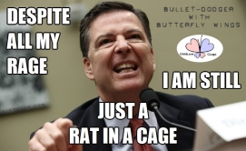 Despite All My Rage Still Just a Rat in a Cage Comey Weasel Bullet-Dodger