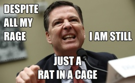 Despite All My Rage Still Just a Rat in a Cage Comey Weasel