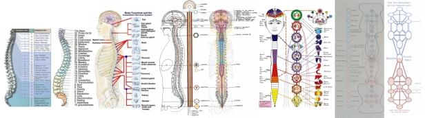 ! ! Chakra Physiology Expanded 2 (Goswami Layayoga)