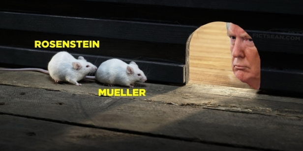 funny-wallpaper-with-cat-and-mice Rosenstein Mueller