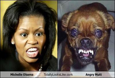 + Comparison Michelle Obama and Chihuahua